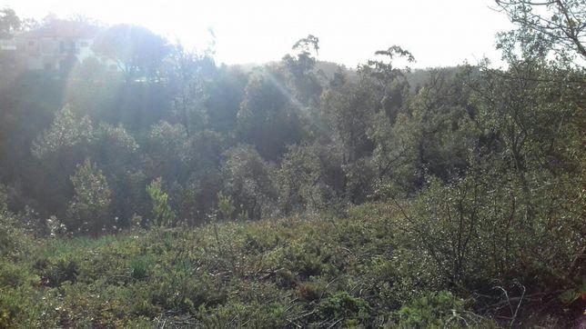 Limpeza de floresta