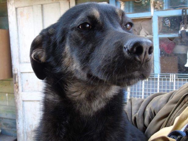 Бесплатно: крупный щенок девочка Зета 6 мес, стерилизована