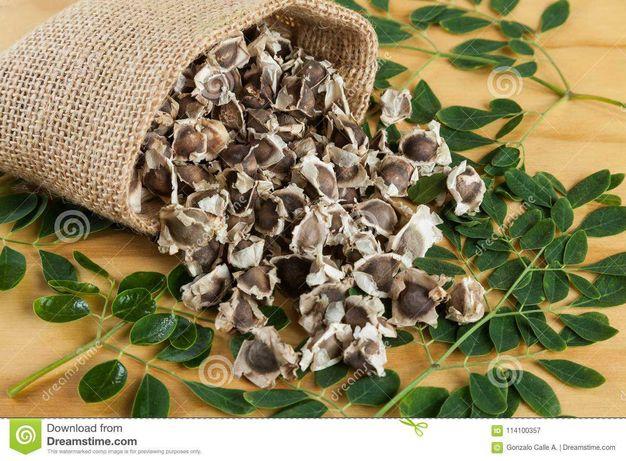 Sementes de Moringa  (oriundas de Angola)
