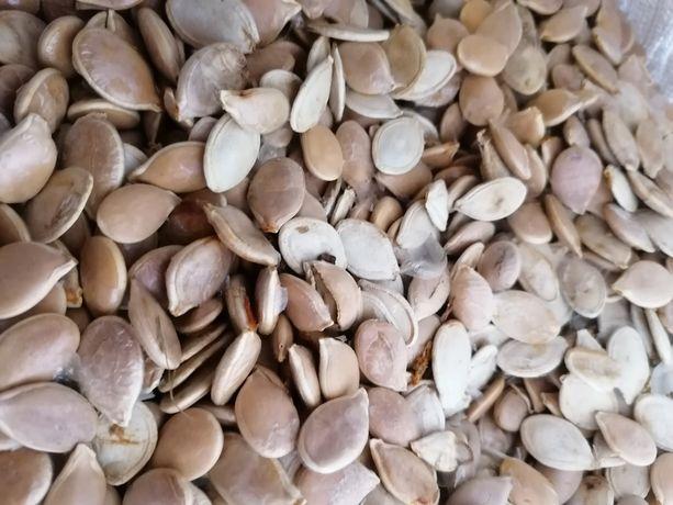 Семена тыквы, насіння гарбуза
