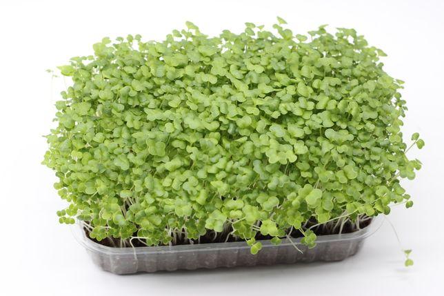 Мікрозелень/Микрозелень Набір для вирощування/Набор для выращивания