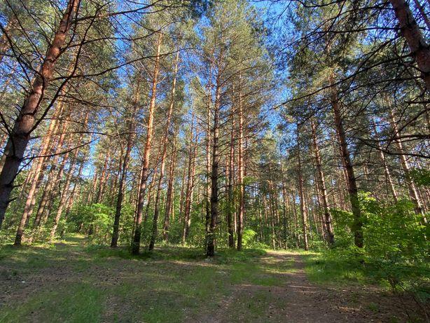 Безрадичи 10 - 25 соток лес под жилую застройку