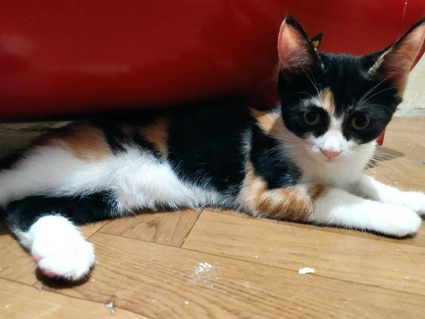 Кошке 3 месяца, отдам в заботливые руки!