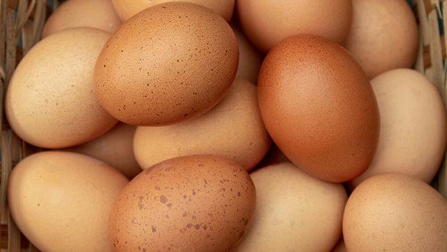 Московская черная - инкубационные яйца кур