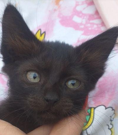 Котенок котик 2 месяца в хорошие руки