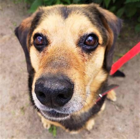 SAMI - kochany, spokojny psiak szuka dobrego domu
