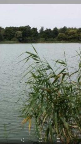 Teren w dzierżawę jezioro 600złna rok