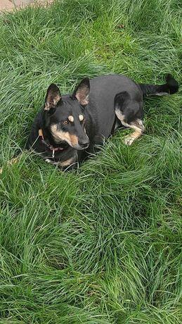 Собака ищет дом, уже стерилизованная