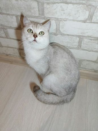 Кот для вязки...