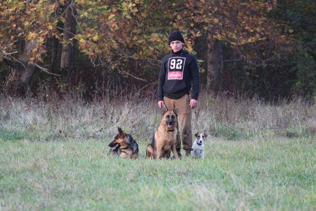 Дрессировка собак средних и крупных пород!