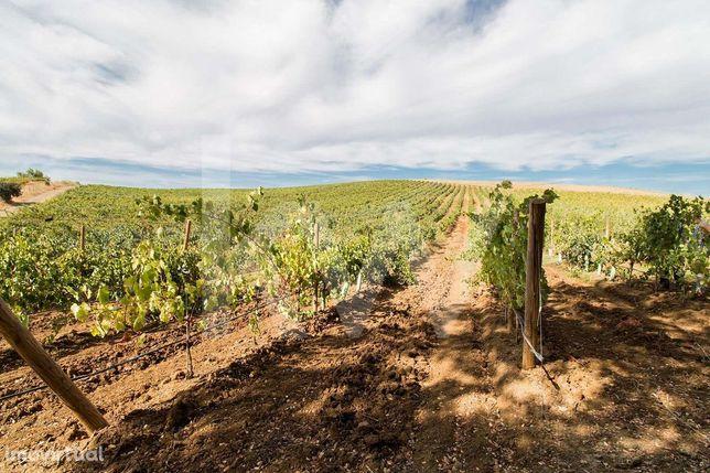 Monte Alentejano com Vinha em Produção sito em Vila de Frades
