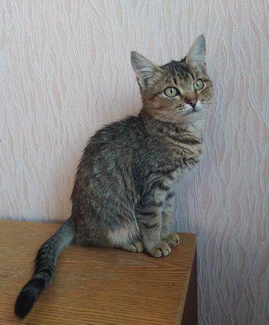Отдам котят_ котята_ а хороший дом Симка