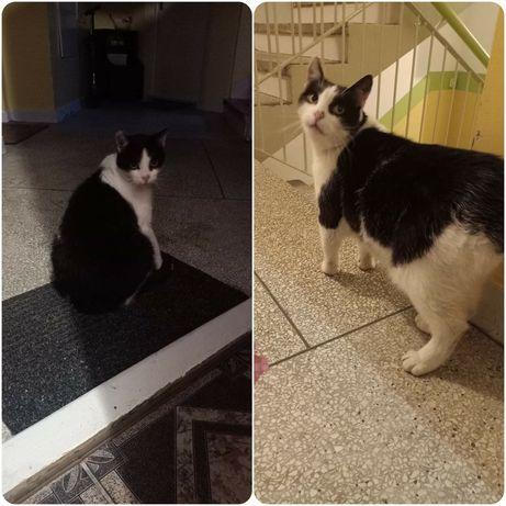 Błąka się czarno-biały kot/kotka