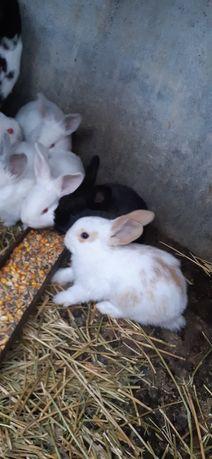 Кролики молоденький