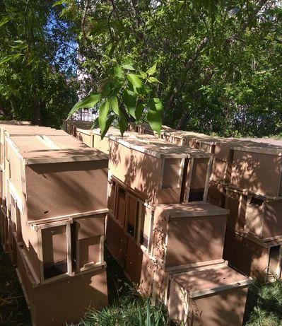 Пчелопакети Карніка та Карпатка