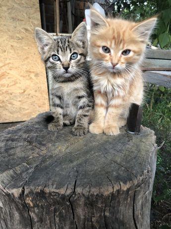 Чудесные котики в хорошие руки
