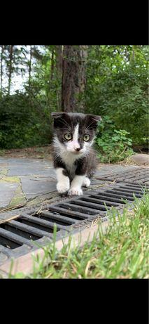 Вислоухий котёнок-мальчик в добрые руки.