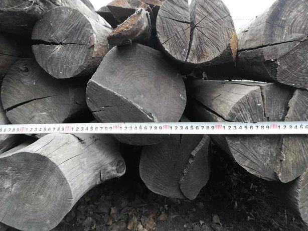 Лес строительный (кругляк) деревьев твёрдых пород (бук, ясень)