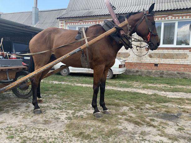 Продам лошадь,кобыла