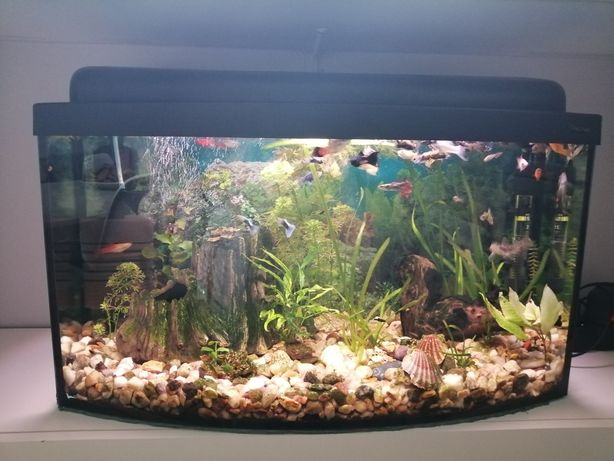 Akwarium z pokrywą 60l