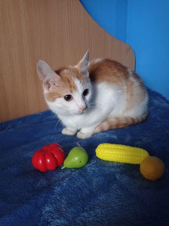 Яркая рыже-белая кошечка