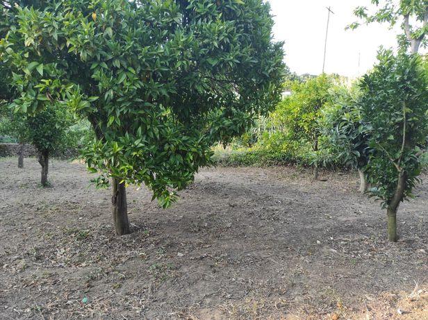 Limpeza de Mato | Terrenos | Hortas
