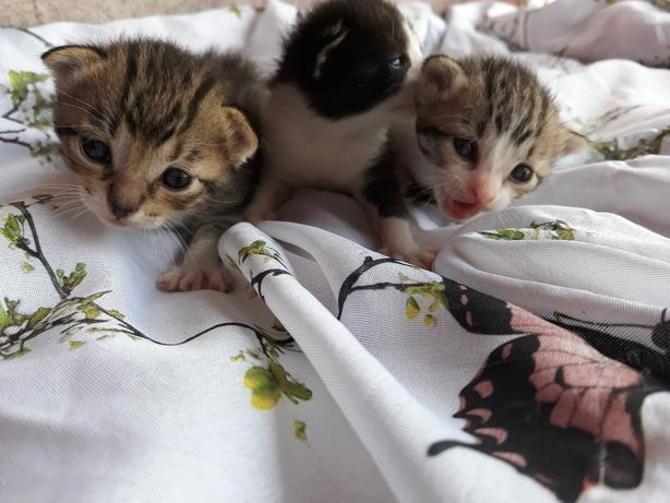 Gatinhos procuram novo lar