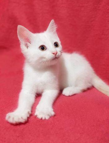 Потрясающий котенок, 2 месяца, девочка, в хорошие руки! Бесплатно