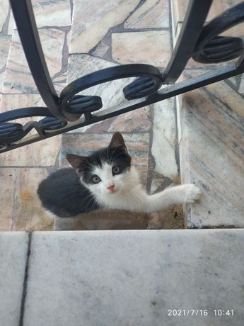 Oddam  małgo  kotka .