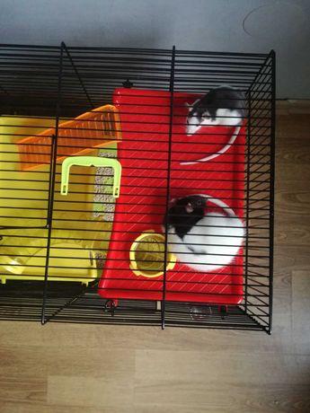 Szczurki z nową klatką 50 zł