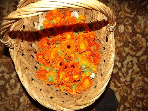 Цвіт календули(ноготки)