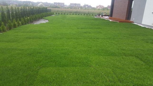 Trawnik z siewu, trawnik z rolki wykonanie/ aeracja wertykulacja
