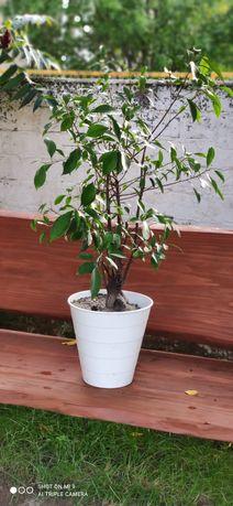 Drzewko Bonsai za karmę dla kota.