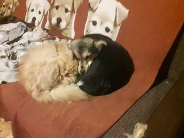 Pies szczeniak i kot przyjaciele