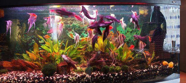 Akwarium z rybkami i pełnym wyposażeniem