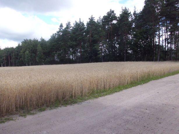 Działka rolno - leśna - z dostępem do drogi pubicznej .