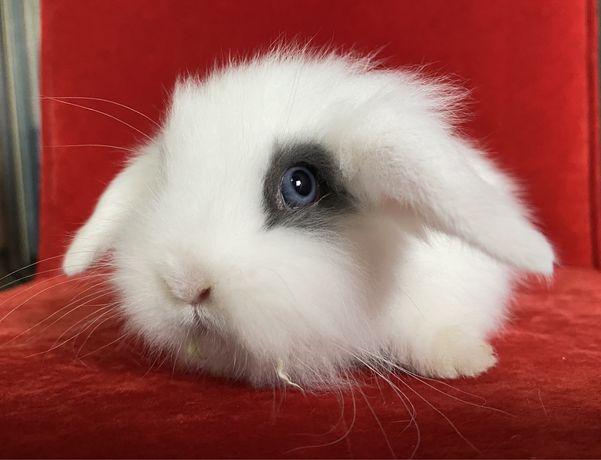 Прелестные вислоухие декоративные кролики