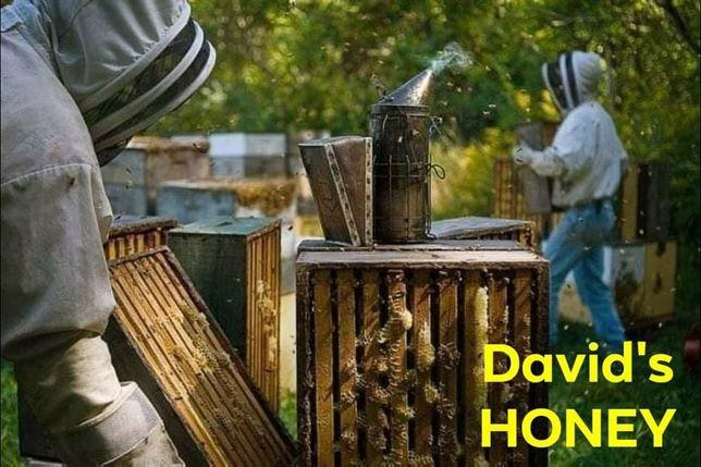 Бджоли, пчелопакеты