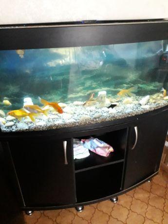 Продам Аквариум с рыбками на 220 литров