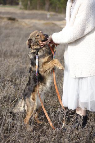 Majek i MIGOTKA male psy do adopcji w dwupaku
