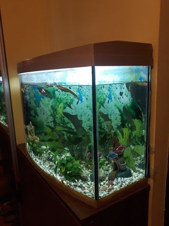 Акваріум з рибками 100 л