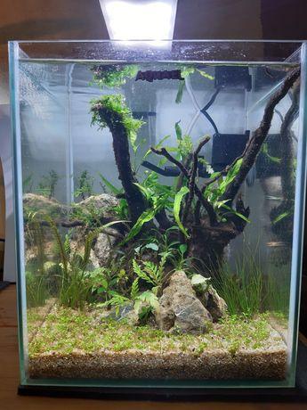 Akwarium nowy zestaw aquael 25x25x30 19l