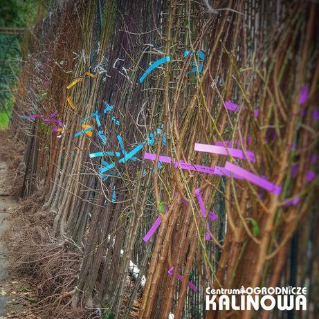 Drzewka owocowe goła bryła korzeniowa OWOCÓWKA - sklep KALINOWA