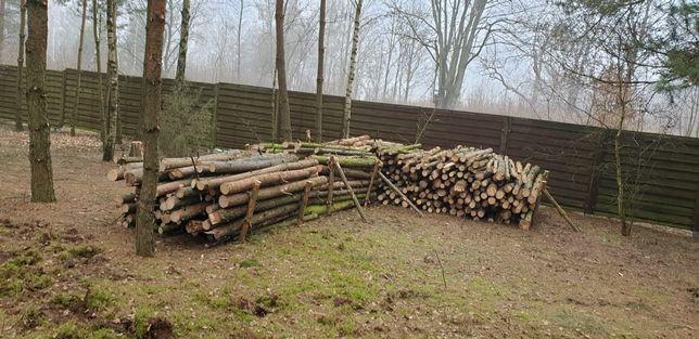 Drzewo Sosnowe idealne na opał czy na stemple budowlane