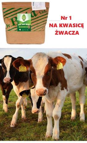 Mikrokapsułkowane żywe drożdże LIVE SACC DAIRY na kwasicę u krów 15kg