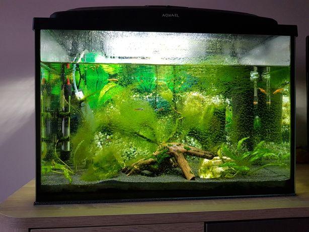 Akwarium Aquael 72 litry zestaw