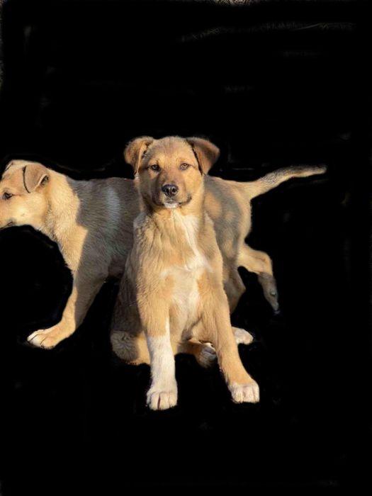 Отдадим щенка в добрые руки Одесса - изображение 1