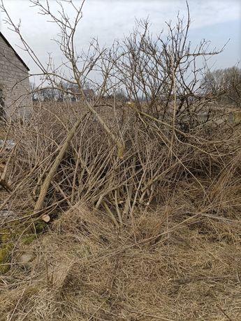 Gałęzie duża ilość