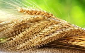 Продажа зерновых, кормовых добавок, комбикорма.