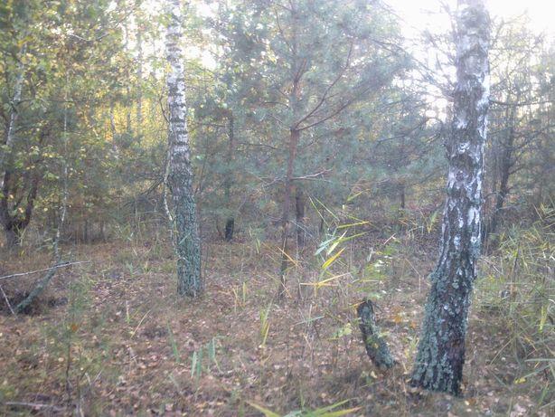 Круги, привлекательный участок 15 соток под строй. с лесом.